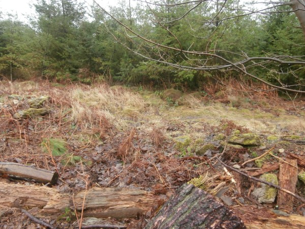 Crash site of Jet Provost XW426 in Dalby Forest, Pickering