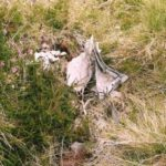 Small quantity of wreckage at the crash site of Airspeed Oxford LB537 on Cornel Min near Llyn Crafnant